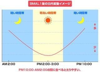 【夜は太る】の原因はBMAL1という脂肪を蓄積させやすくするたんぱく質! 22時〜深夜2時頃に活発になり、最小値である昼の14時と比べるとその差は何と20倍!! BMAL1に気をつけた食生活をおくりましょう